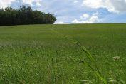 les phytotechnologies : dépolluer les sols